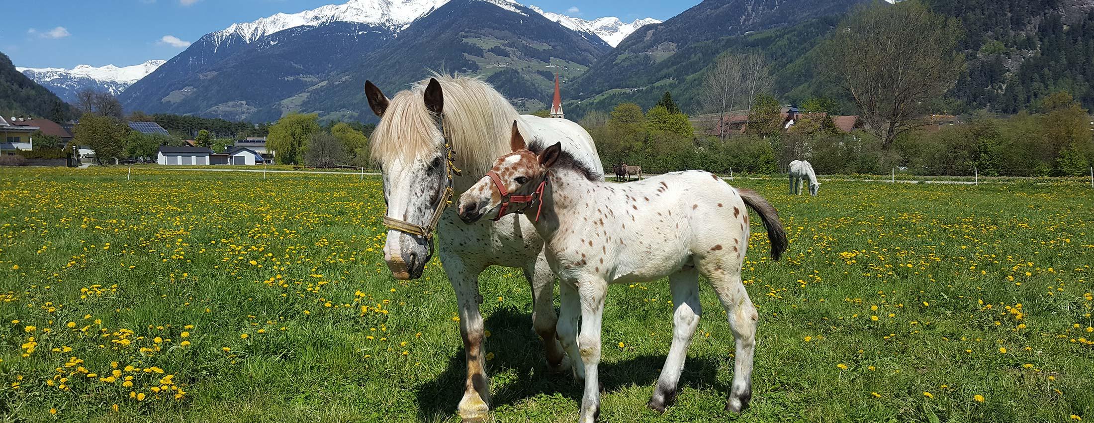 Christlrumerhof Slider Pferde